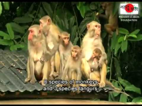 Travel Bangladesh   Discover Nature and Life 4B   travelbangladesh net