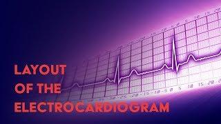 Electrocardiogram (EKG or ECG) Anatomical Layout - MEDZCOOL