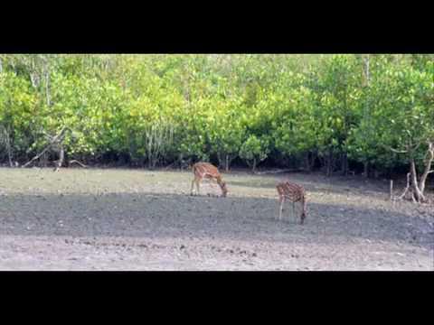 Rejser Ferie i Bangladesh Sundarbans Explorer rejser ferie Dhaka Bangladesh