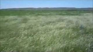 Ocean of Grass