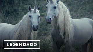 ☆LiL PEEP☆ x  horsehead - right here (legendado)
