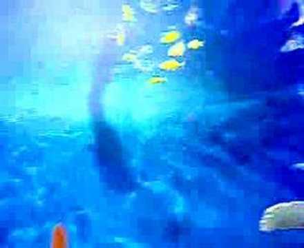 Panora Alışveriş Merkezi Balık Akvaryumu (köpek balıkları...
