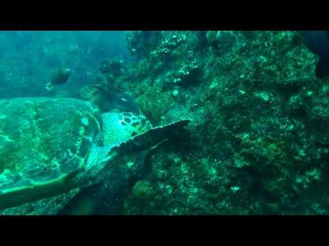 Scuba Diving at Aliwal Shoal