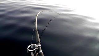 Monster Salmon Crushes Dipsy!