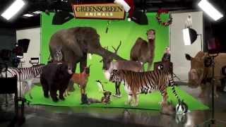 GreenScreen Animals Holiday Greeting