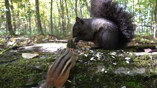 10 Hours of Forest Animals - Videos for Pets - Oct 4 2020