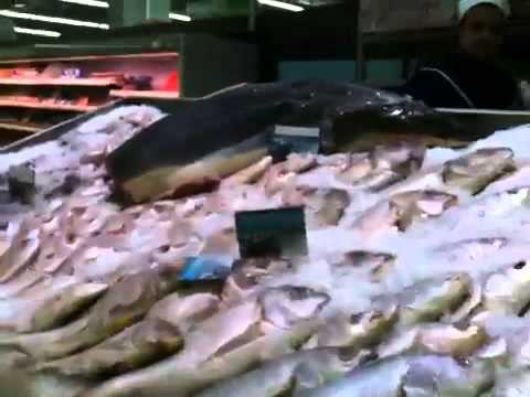 Shark for sale in Marrakech supermarket, Morocco