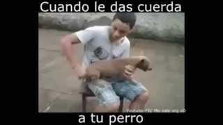 Perro loco (Crazy dog)