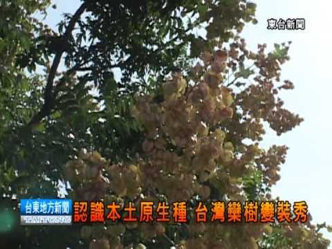 121031認識本土原生種 台灣欒樹變裝秀 - YouTube