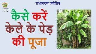 कैसे करें केले के पेड़ की पूजा– Kaise Karen Kele Ke Ped Ki Puja - Radha Charan