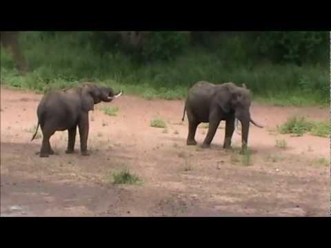 Elephants Explained – Bushveld Safaris