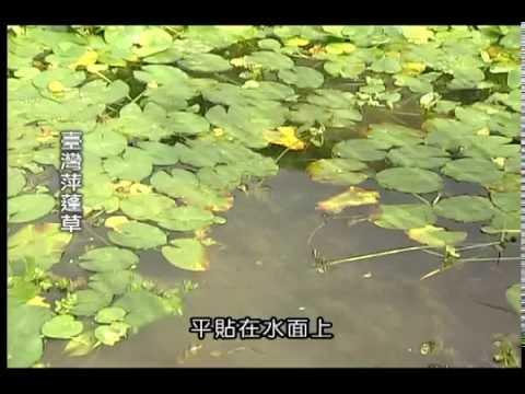 水生植物種類