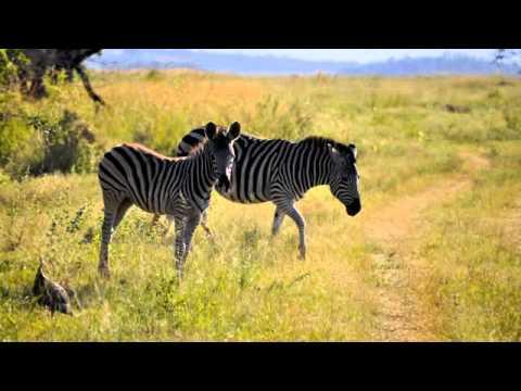 Entabeni Safari Game Drive 2