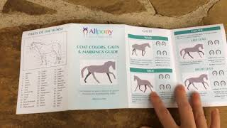Allpony Coat Colors, Gaits & Markings Guide