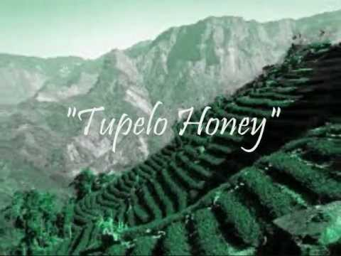 Tupelo Honey - Van Morrison Chords - Chordify