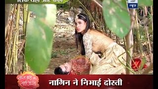 Naagin 2: Shivangi SAVES her friend Rudra