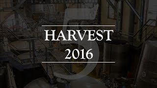 The Punch Down   #Harvest2016 EP.5
