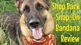 Review: Shop.Bark Snap-On Dog Bandana