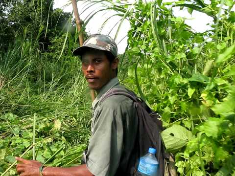chitwan jungle walk