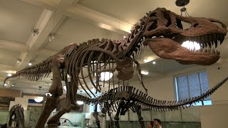 American Museum of Natural History in New York