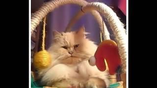 Badylek Kot Perski :)