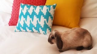 Look What I Found On My Bed! Cutest Rabbit Ever!   Mini Lop Bunny 8 Weeks Old #4
