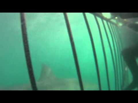 Shark Teaser