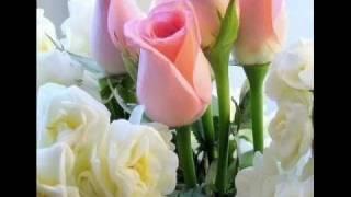 te   llevare  20  rosas.wmv