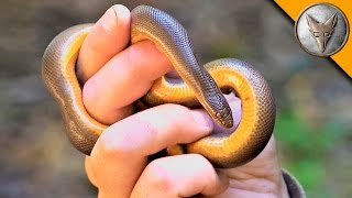 Can a Snake Cure Fear?