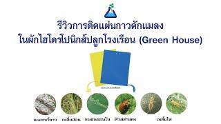TAB_Innovation EP2: รีวิวการติดแผ่นกาวดักแมลงในผักไฮโดรโปนิกส์ที่ปลูกในโรงเรือน (Green House)
