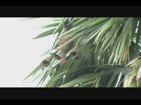 Gram Bangla Motion Picture Presents (KASHFUL)