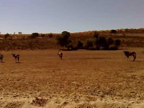 Kgalagadi Transfrontier Park , Sudafrica – Part 2.