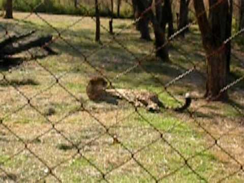 Lion Farm – 4 – Cheetahs
