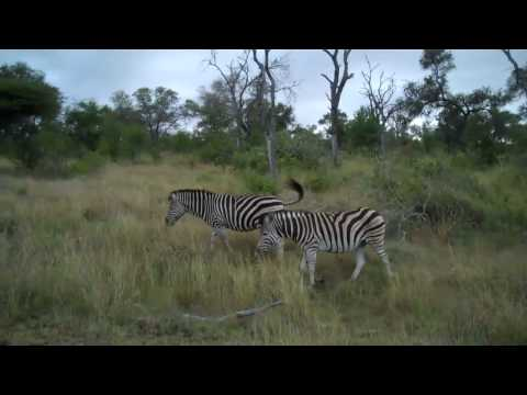 Kirkman's Camp Safari in Kruger National Park South Africa – World Cup 2010