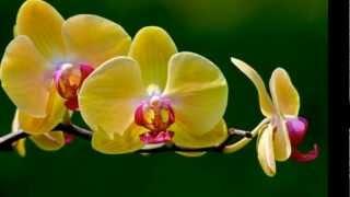 """Tamara Castro """"Mi flor amarilla"""""""