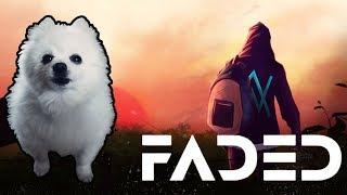 Alan Walker - 'Faded' em cachorrês (ORIGINAL)