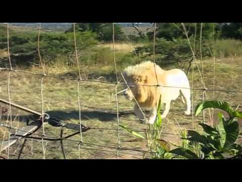 ISV South Africa – The Other Half Video by Andrew Hafnor