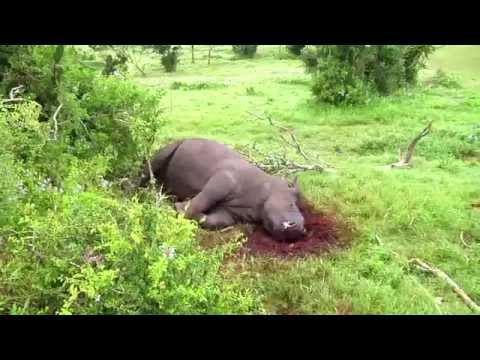 Brutal poaching of Kariega Game Reserve rhino's – Thandi and Themba