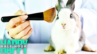 California BANS Animal-Tested Cosmetics