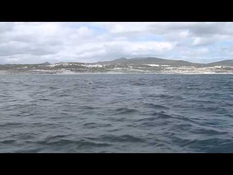 Whale Watching (2) – Hermanus. S. Africa