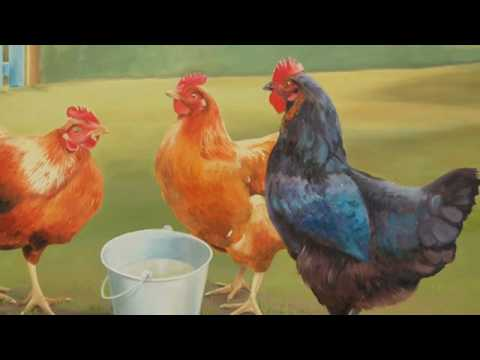 公雞和母雞(動物狂歡節)