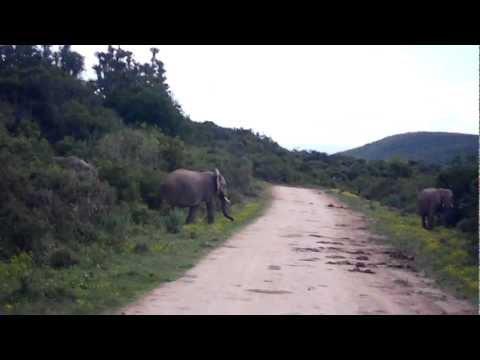 Elephants on the safari!!