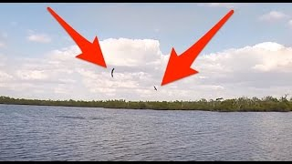 Bald Eagle Steals Sheepshead From Osprey