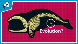 What is the Evidence for Evolution?