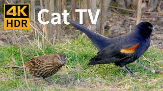 Cat TV 4K HDR: Birds by the Lake - 8 Hour Videos for Cats to Watch
