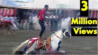 सलमान खान को मुहब्बत है इस घोड़े से : पर मालिक ने 2 करोड़ का ऑफर ठुकराया