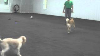 Aldens Kennels Inc. Dog Boarding Johnsburg IL.