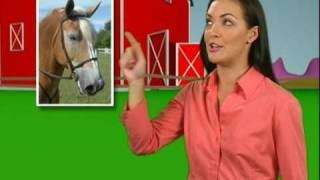 Trailer - Los Animales (Spanish for Kids)
