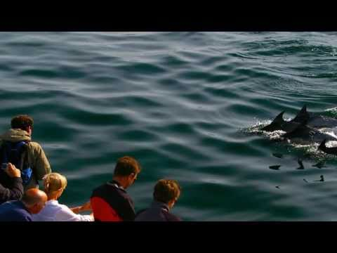 Hermanus Dolphins – South Africa