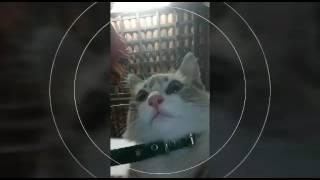 Gato bonitão saiu bem nas fotos